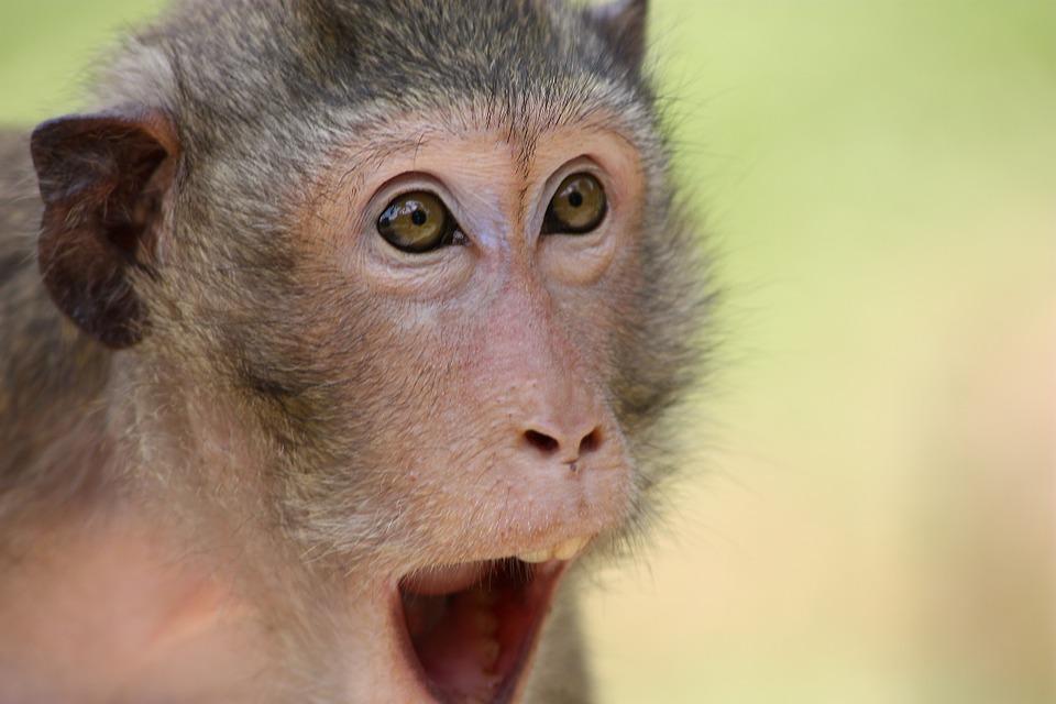 The monkey 409407 960 720